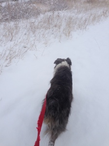 Running with my dog in the snow